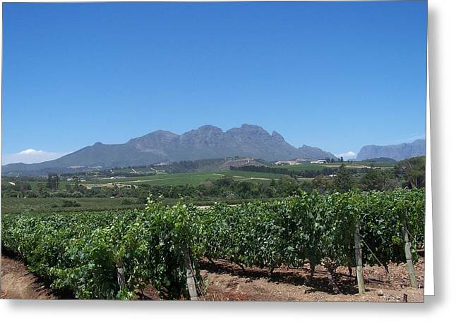 Vineyards Cape Town Greeting Card by Vijay Sharon Govender