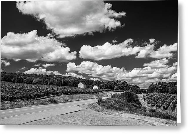 Vineyards In Summer II Greeting Card by Steven Ainsworth