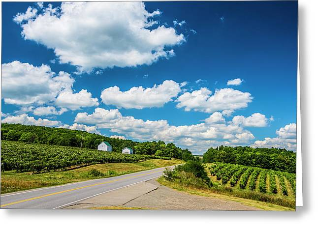 Vineyards In Summer Greeting Card by Steven Ainsworth