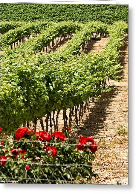 Vineyards In The Galilee  4 Greeting Card by Arik Baltinester