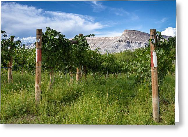Vineyards In The Grand Valley Greeting Card by Teri Virbickis
