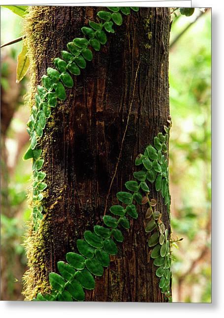 Vining Fern On Sierra Palm Tree Greeting Card by Thomas R Fletcher