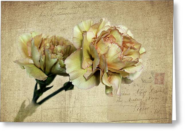 Vintage Carnations Greeting Card