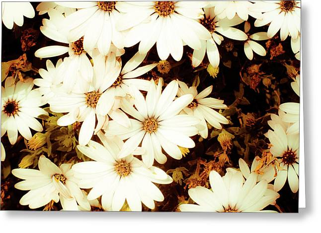 Vintage Daisies Greeting Card by Denice Breaux
