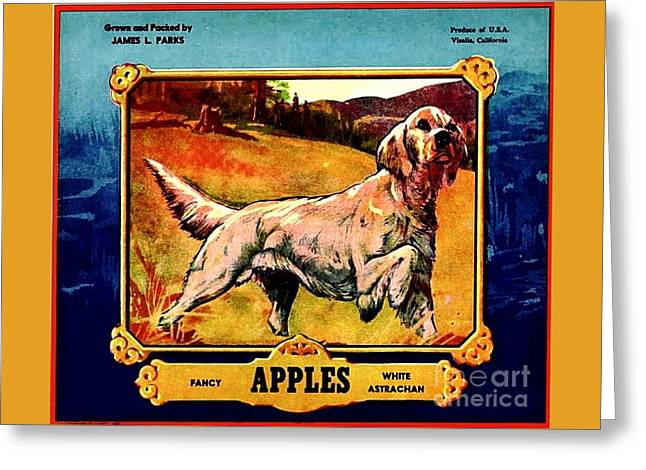 Vintage English Setter Apples Advertisement Greeting Card by Peter Gumaer Ogden