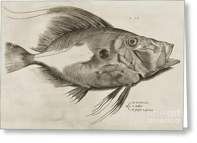 Vintage Fish Print Greeting Card