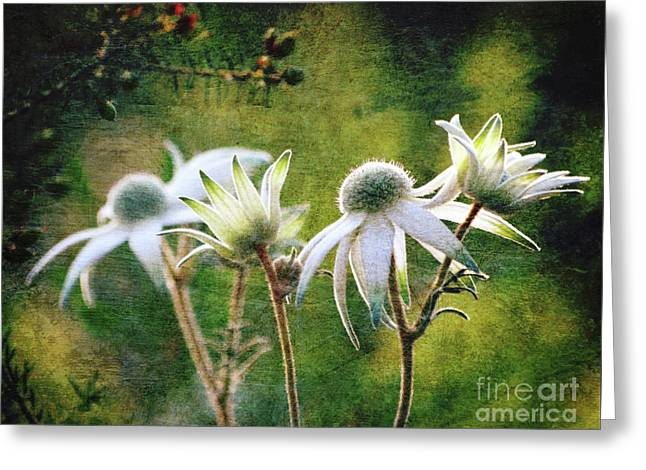 Vintage Flannel Flowers Greeting Card by Karen Black