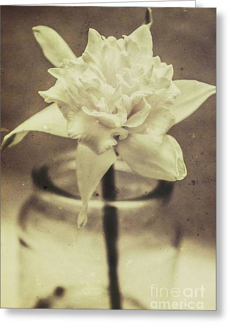 Vintage Floral Still Life Of A Pure White Bloom Greeting Card by Jorgo Photography - Wall Art Gallery