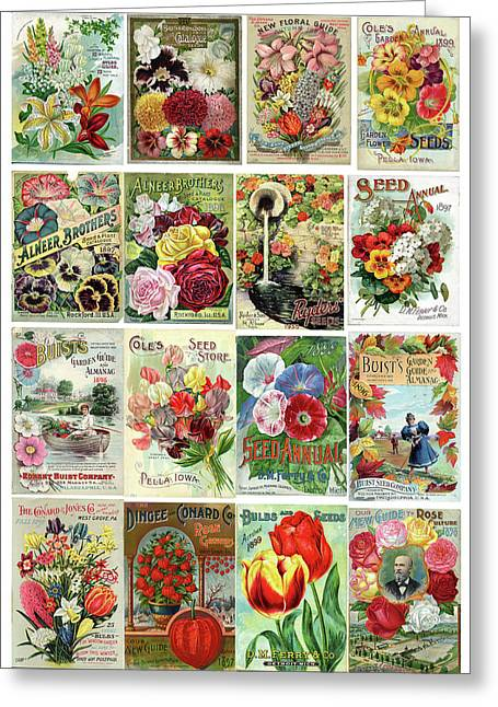 Vintage Flower Seed Packets 1 Greeting Card by Peggy Collins