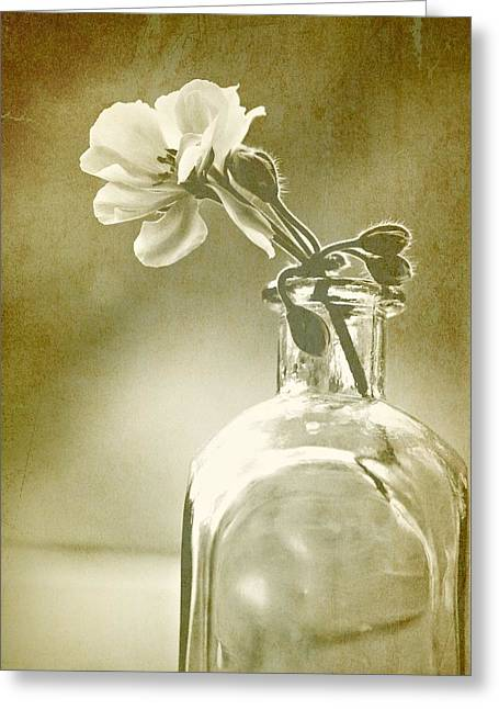 Vintage Geranium Greeting Card by Amy Neal