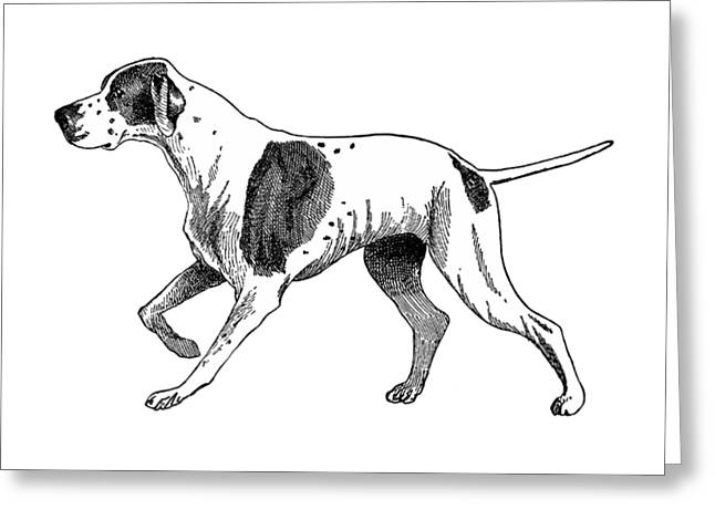 Vintage German Shorthaired Pointer Greeting Card