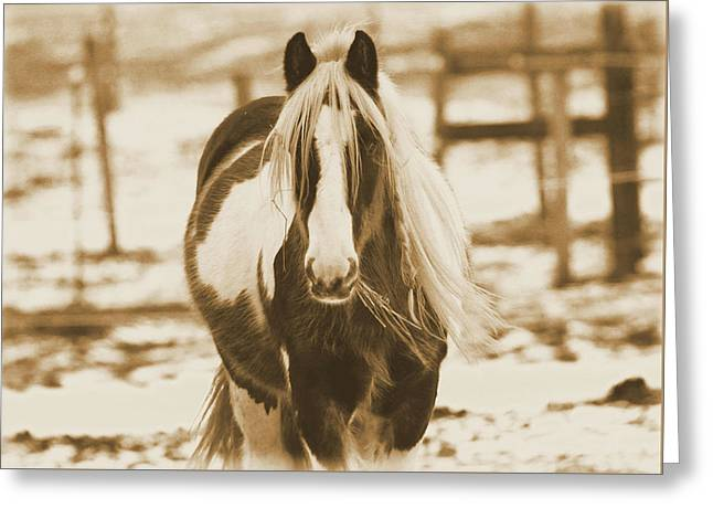 Vintage Horse On The Farm Greeting Card by Dan Sproul
