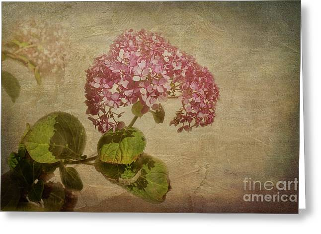 Greeting Card featuring the photograph Vintage Hydrangea by Elaine Teague