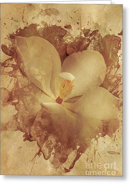 Vintage Paper Magnolia Greeting Card by Jorgo Photography - Wall Art Gallery