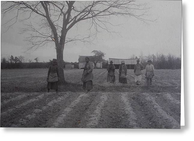 Greeting Card featuring the photograph Vintage Photograph 1902 New Bern North Carolina Sharecroppers by Unknown