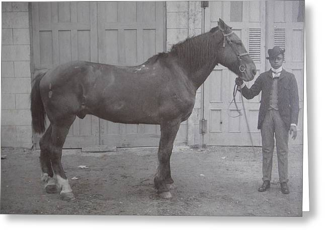 Vintage Photograph 1902 Horse With Handler New Bern Nc Area Greeting Card by Virginia Coyle
