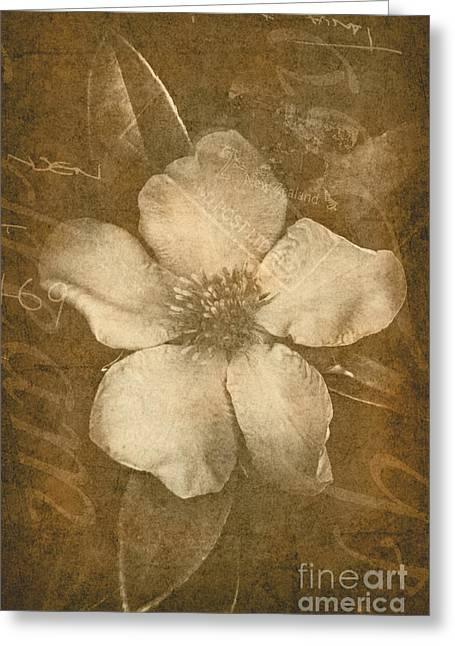 Vintage Postcard Flower Greeting Card