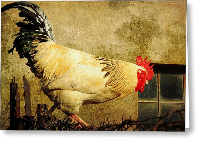 Vintage Rooster Greeting Card by Gary Smith