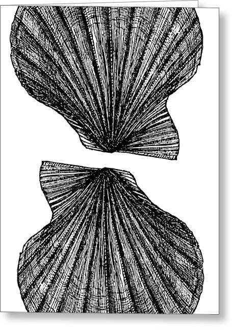 Vintage Scallop Shells Greeting Card by Edward Fielding