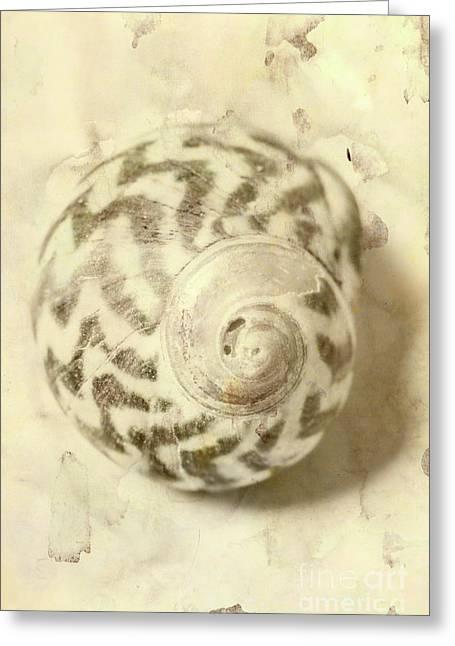 Vintage Seashell Still Life Greeting Card