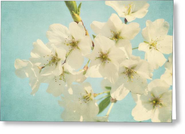 Best Sellers -  - Kim Photographs Greeting Cards - Vintage Spring Blossoms Greeting Card by Kim Hojnacki