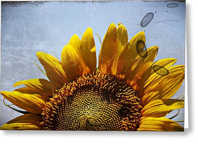 Vintage Sunflower- Fine Art Greeting Card