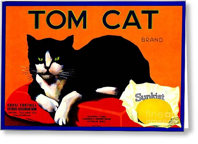 Vintage Sunkist Tom Cat Greeting Card