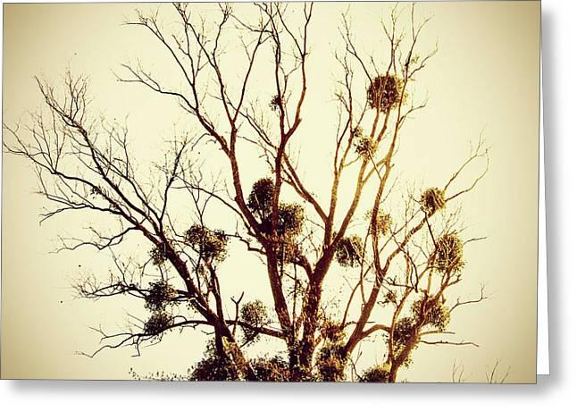 Vintage Tree Greeting Card by Bernard Jaubert