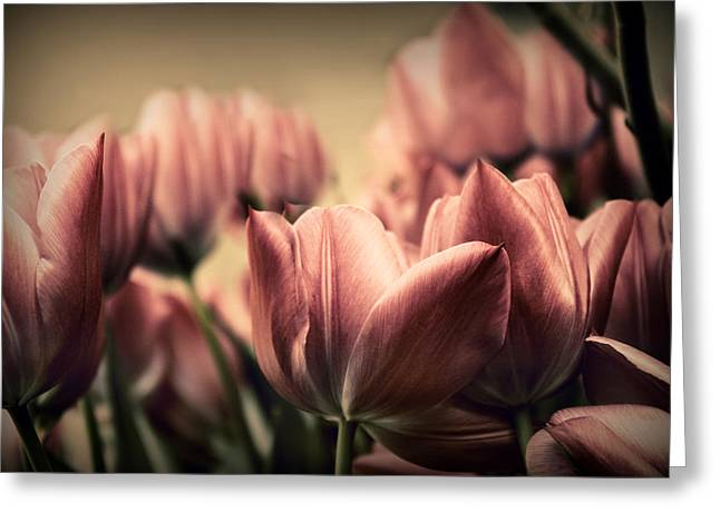 Vintage Tulips Greeting Card by Jessica Jenney