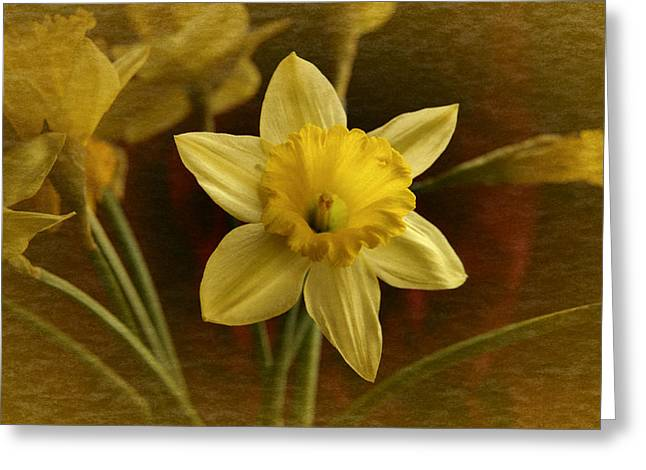 Vintage Yellow Narcissus Greeting Card by Richard Cummings