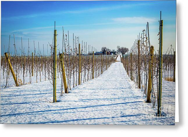 Vinyard On Down Road  Greeting Card