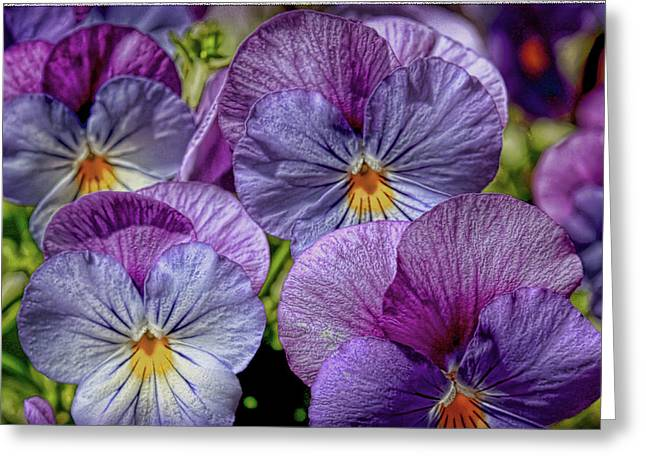 Greeting Card featuring the photograph Viola by Bonnie Willis