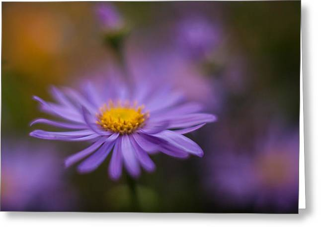 Violet Daisy Dreams Greeting Card