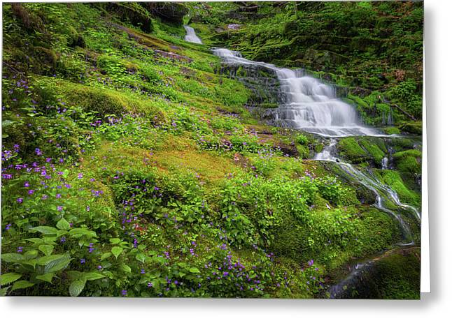 Violet Falls Greeting Card by Bill Wakeley