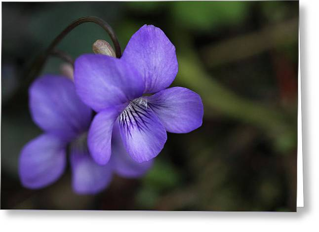 Violet Flowers Greeting Card