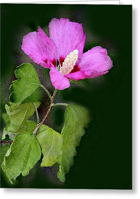 Green Burgandy Greeting Cards - Violet Hibiscus Digital Painting Greeting Card by Linda Phelps