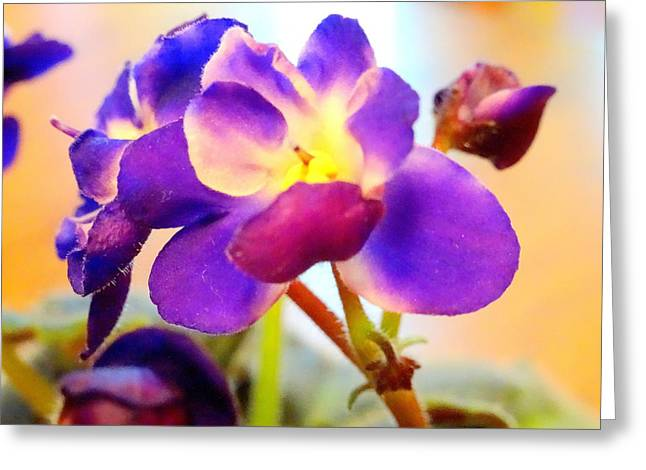 Violet In Bloom Greeting Card