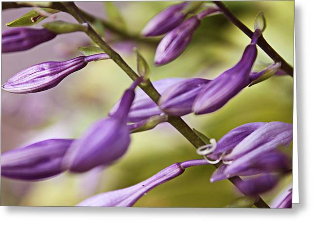 Violet Greeting Card by Mark  France