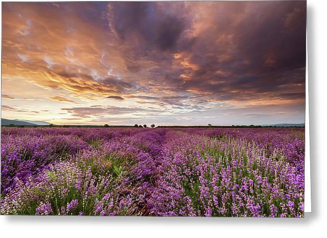 Violet Sunrise Greeting Card by Evgeni Dinev
