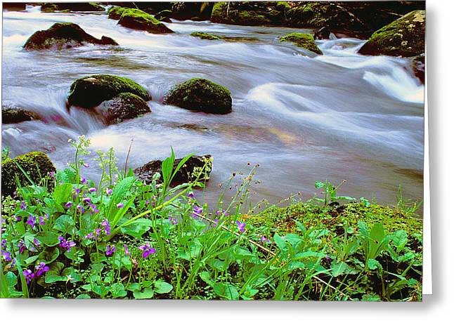 Violets Along Hazel Creek Greeting Card by Alan Lenk