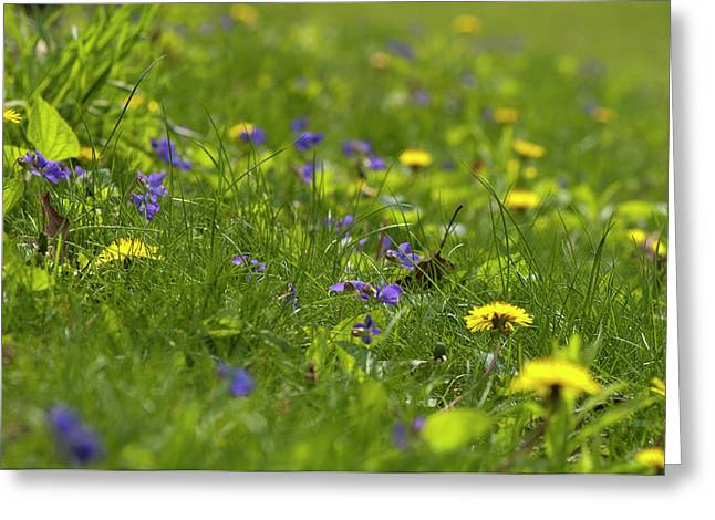Violets And Dandelions Greeting Card