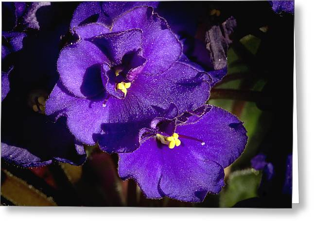 Greeting Card featuring the photograph Violets by Phyllis Denton