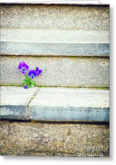 Greeting Card featuring the photograph Violets    by Silvia Ganora