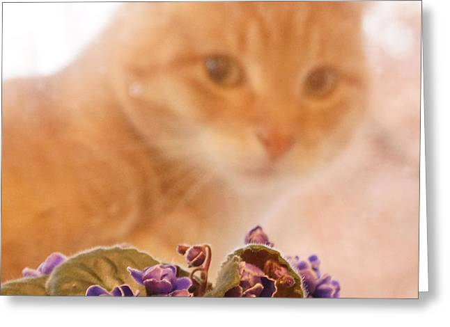 Violets With Cat Greeting Card