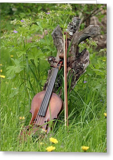 Violin Bows Violin Bows Greeting Cards - Violin  Greeting Card by Dagmar Ceki