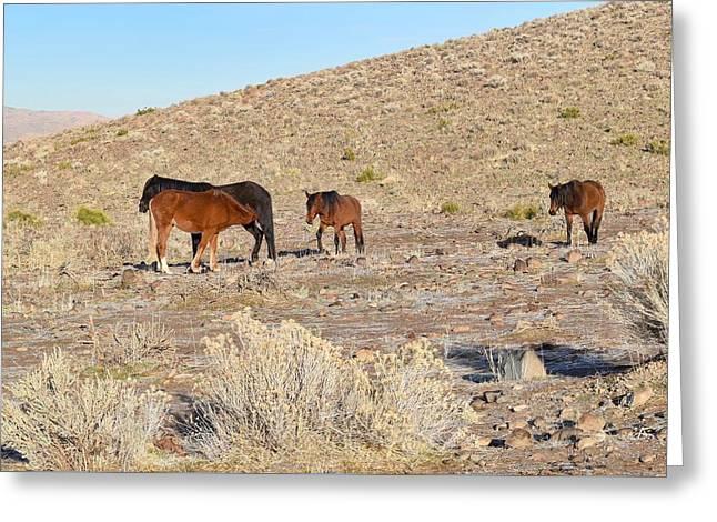 Virginia Range Mustangs Greeting Card