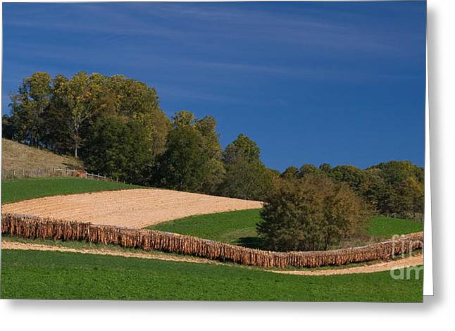 Virginia Tobacco Farm Greeting Card