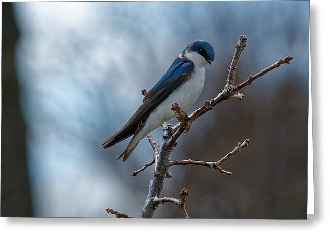 Vision In Blue Greeting Card