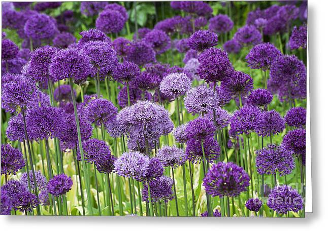 Visions In Purple Greeting Card