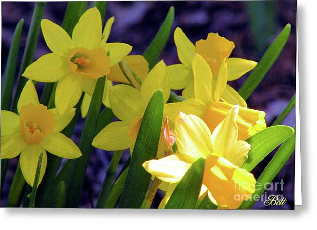 Visions Of Daffodils Danced In Their Heads Greeting Card by Christine Belt